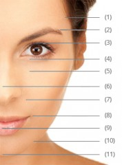 Photo des zones d'augmentation des volumes sur le visage